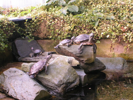 Some ugly-ass turtles
