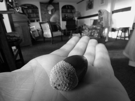 An acorn in my hand